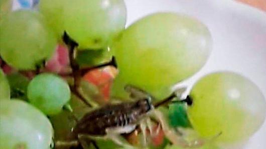 Punta da uno scorpione nascosto nell'uva: 31enne ricoverata d'urgenza in ospedale